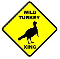 Turkeys of Doom!