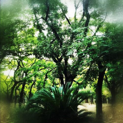 空気に染まれ緑…。 #iphonography #instagram #iphone4s
