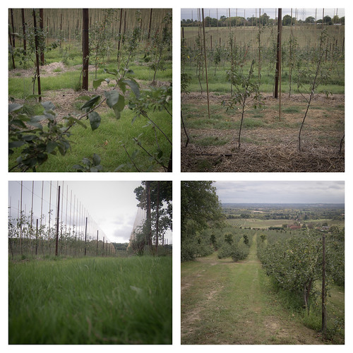 Orchard #1-4