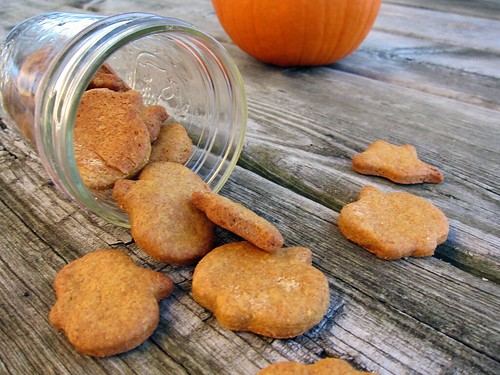 A mason jar tipped on its side with small yellow-orange dog biscuits spilling out; they're in the shape of pumpkins and ghosts. In the background is a pumpkin.