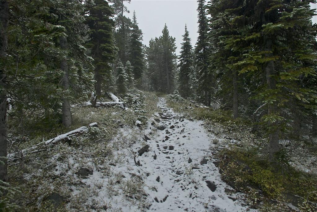 Baldy Mountain trail 340