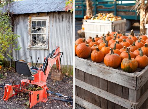 Pumpkin_Trip_1