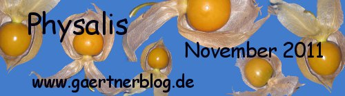 Garten-Koch-Event November 2011: Physalis [30.11.2011]