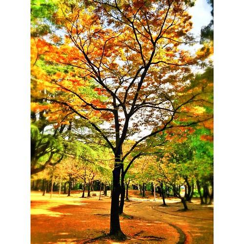 秋近し…   #autumn #iphonography #instagram #iphone4s