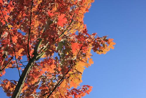 A37 - Autumn