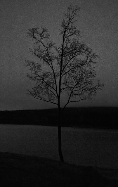 Lonely tree is lonely