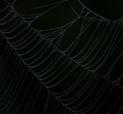 i know - more webs