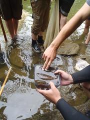 2011 EEOB 622 Field Herpetology Stanford