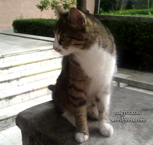 Kóbor macska Törökországban