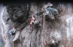 16. Elfin Oak