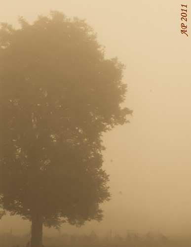 Arbre dans le brouillard / Tree in the Fog