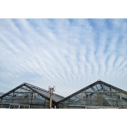 今朝の雲。これなんて言う雲かな? #cloudy #iphonography #instagram #iphone4s