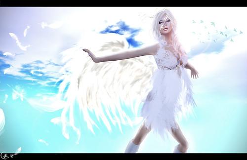光之翼 . Wings of Light
