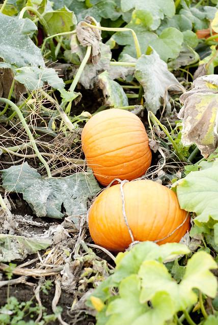 Harvest-14