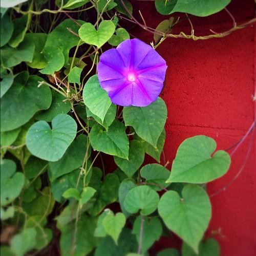 これ何と言うお花なんだろう? #flower #iphonography #iphone4s