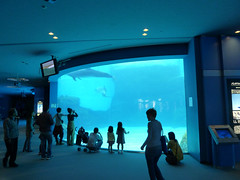 An Afternoon at the Nagoya Aquarium