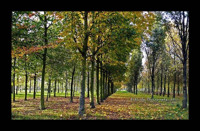 #303/365 Golden Autumn