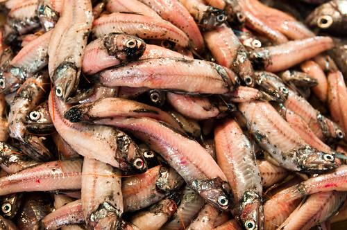 Donggang Fish Market