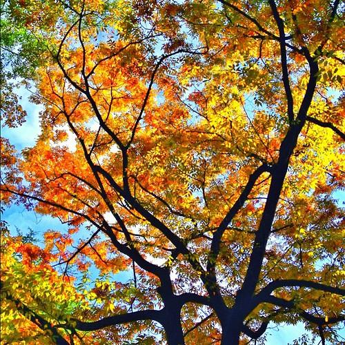 もうすぐ紅葉狩りの季節かな? #autumn #iphonography #instagram #iphone4s