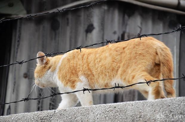 如走鋼索的貓咪06.jpg