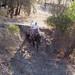 Paso Robles Horse Ranch 17
