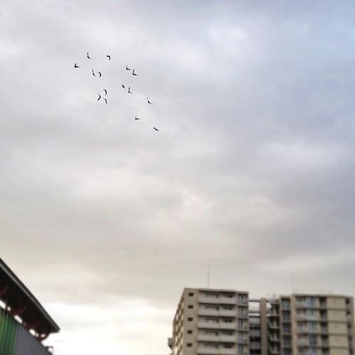 鳥の群れが空を旋回してたよ! ლ(^ε^ლ) #iphonography #instagram #iphone4s