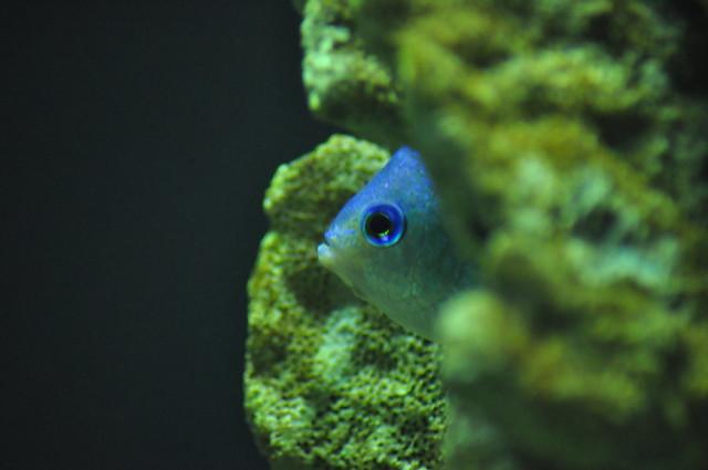 Aquarium at the Fort Worth Zoo