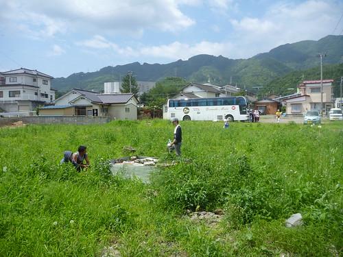 畑で草むしり, 大船渡で震災復旧ボランティア Japan Quake Volunteer Bus to Ofunato, Iwate pref.