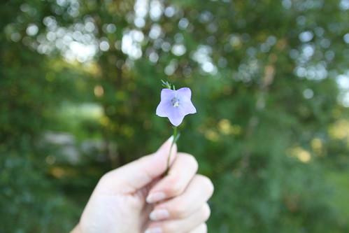 Flower For Peace & Hope