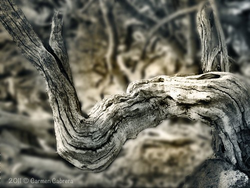 textures and shapes in nature