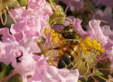 .Bee 2