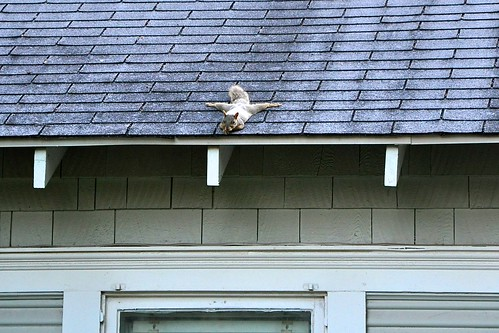 squirrel splits