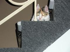 Bella Keeping an Eye on Things