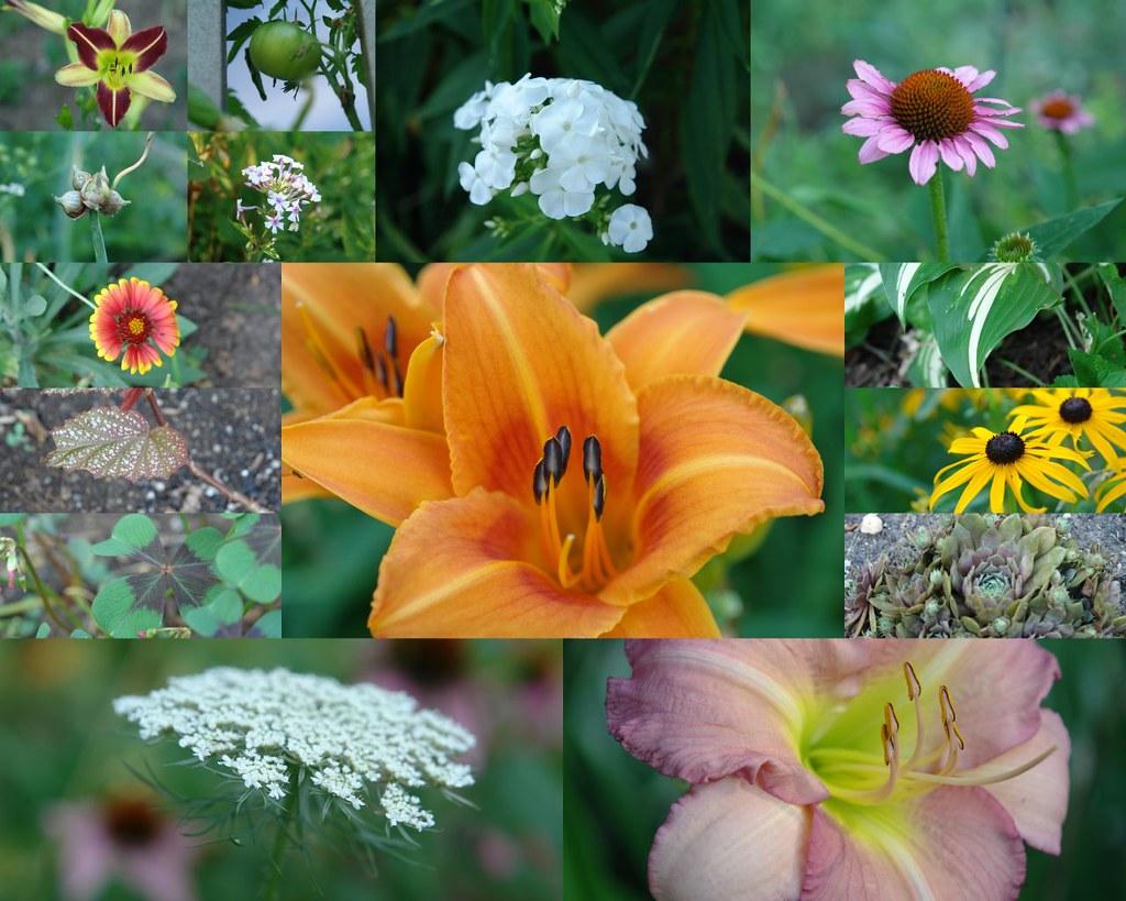 Garden Jul 15 2011