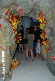 """Exposició """"Les Illes Medes, Mediterrània Viva"""""""