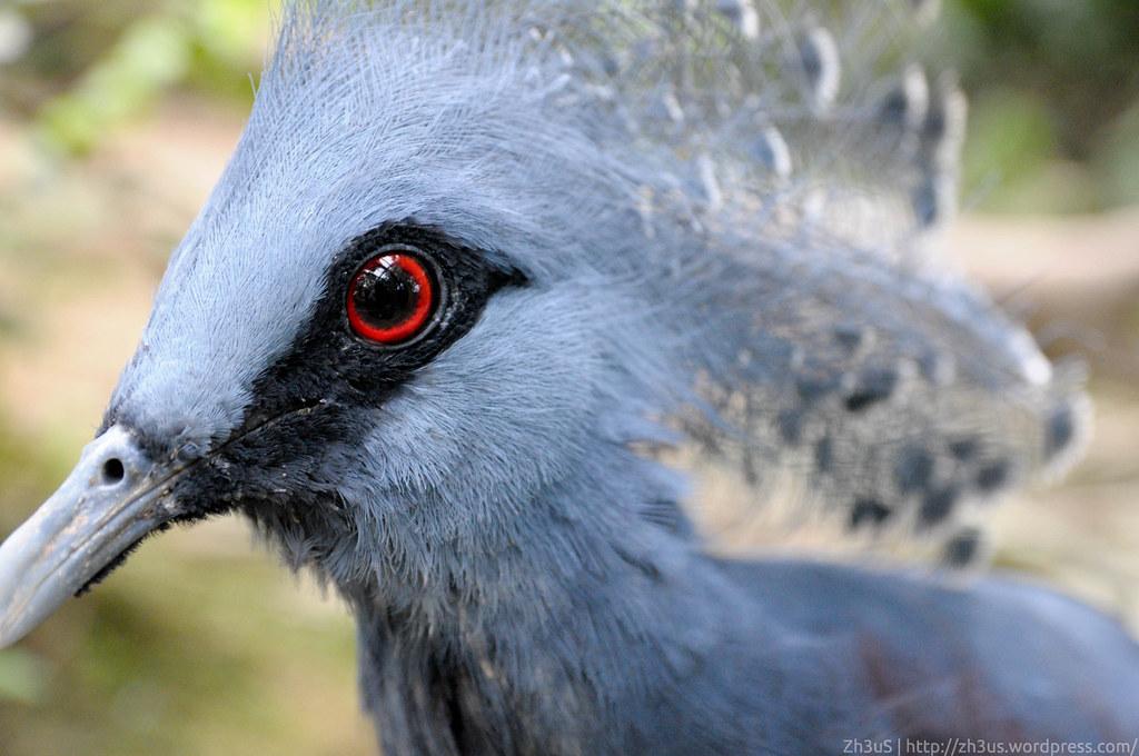 Jurong Birdpark (77 of 89)