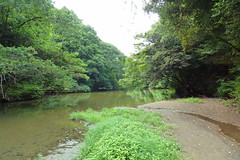 瀬上市民の森(瀬上池)(Pond, Segami Community Woods)