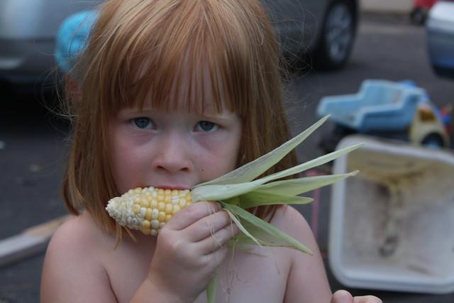 Tabby tastes the corn