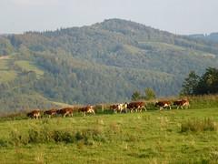 Widoki ze wsi Niedźwiedzice by Polek