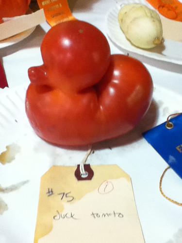 duck tomato!