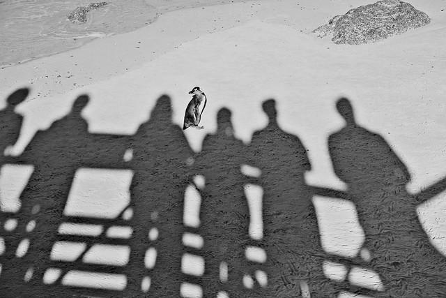 us & a penguin
