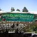 Wild Wonders_CatinWater_11