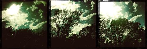 Triptych: Trees