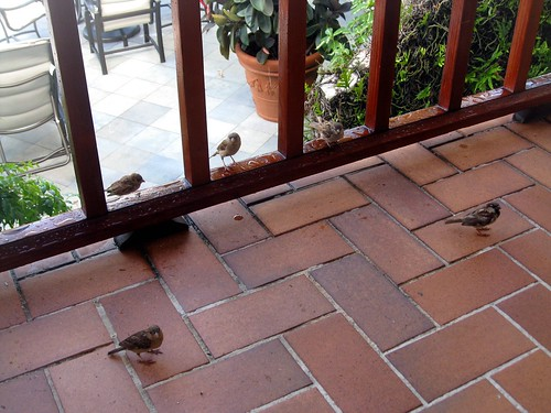 our breakfast pals
