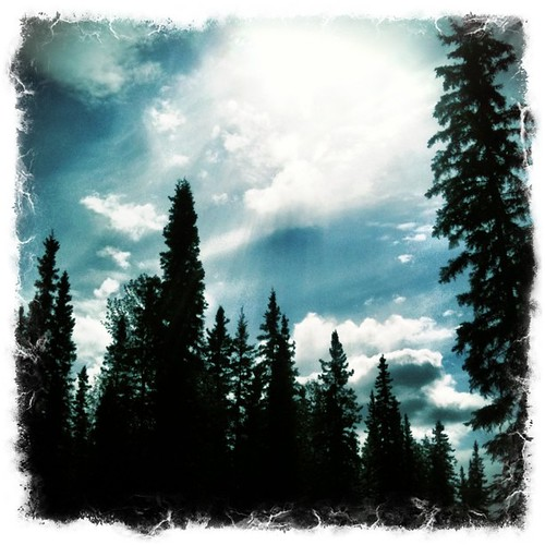 Out #biking today! Saw these #beautiful #trees and #clouds! #bluesky