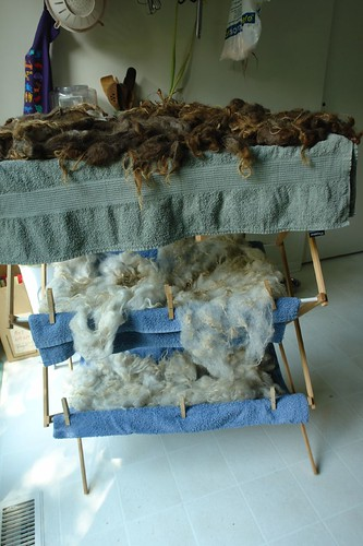 Fleece washing July 23 2011