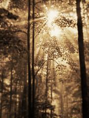 Sunlight, Trees