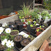Raised bed full of various plant starts @ Sunset Magazine Trial Gardens