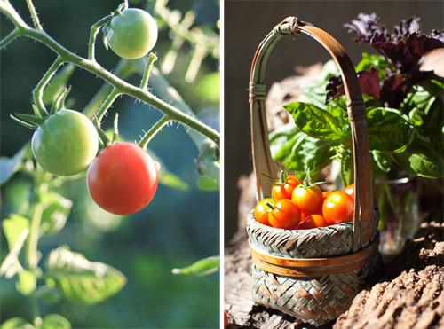 1_Tomato_Salad