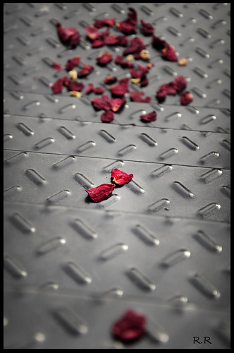 4/365 - Roses on the Road by EcoVirtual